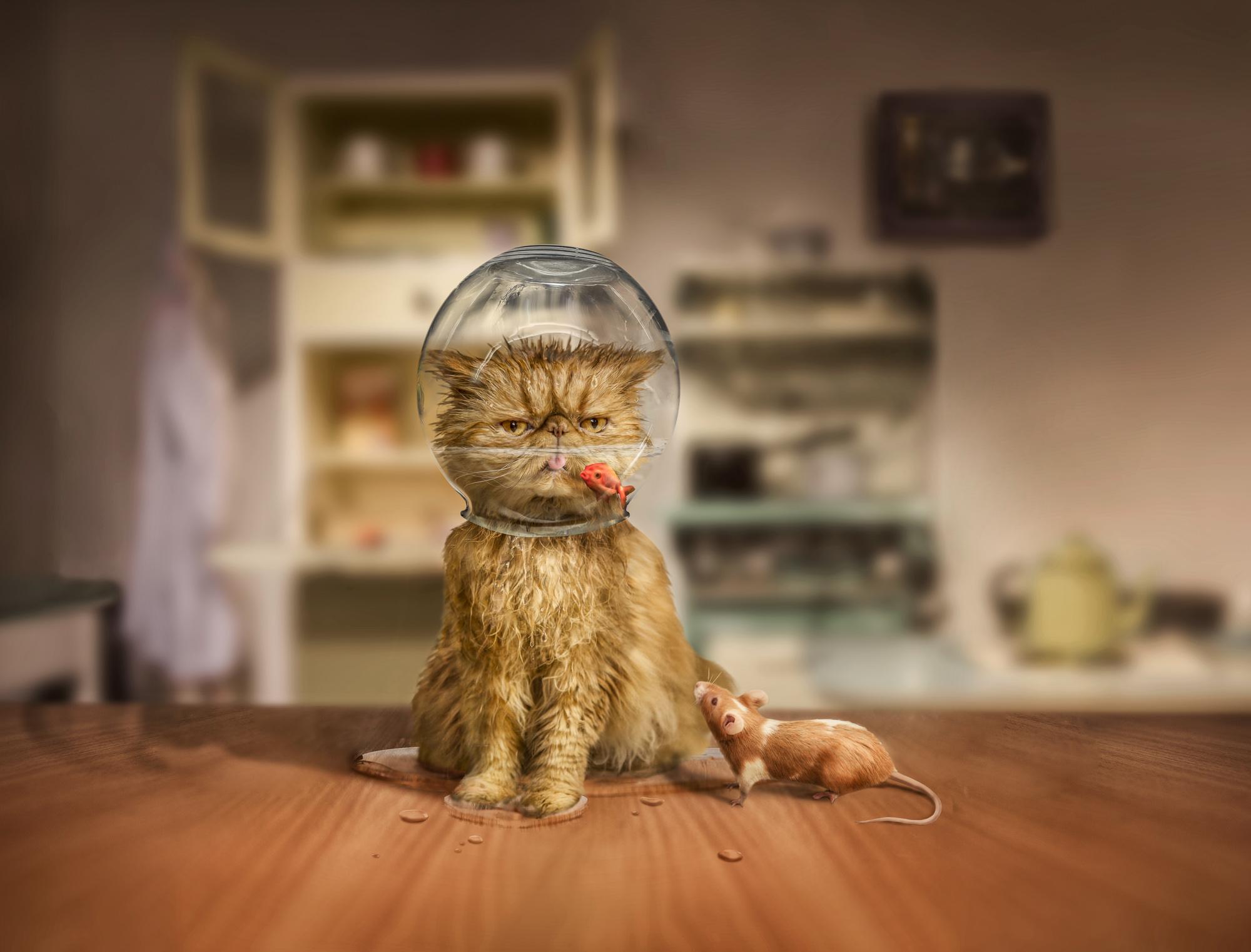 cat+and+bowl-Edit.jpg