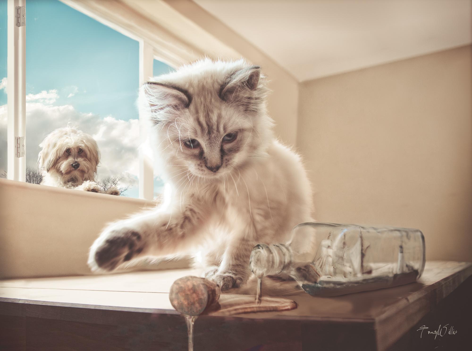 Kittens-Edit-Edit-Edit-Edit-Edit-Edit-2-Edit-Edit-3.jpg