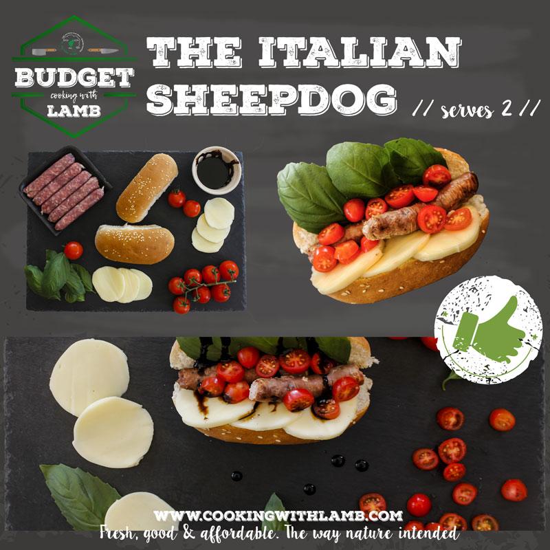 Italina-Sheepdog-.jpg