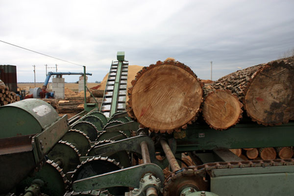 Best service in the area - Fresh-cut logs going through processing on our property.