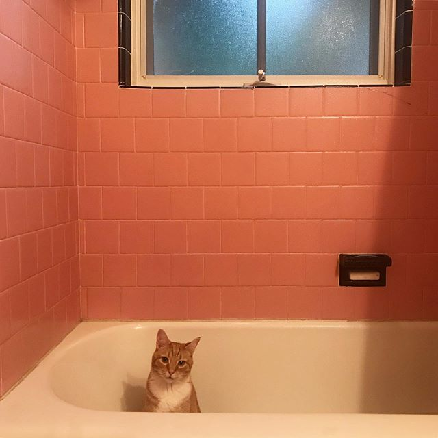 Sharing my bath at @kfmoran @dlgriffin @mookiethewondercat house.  #omalleythecat