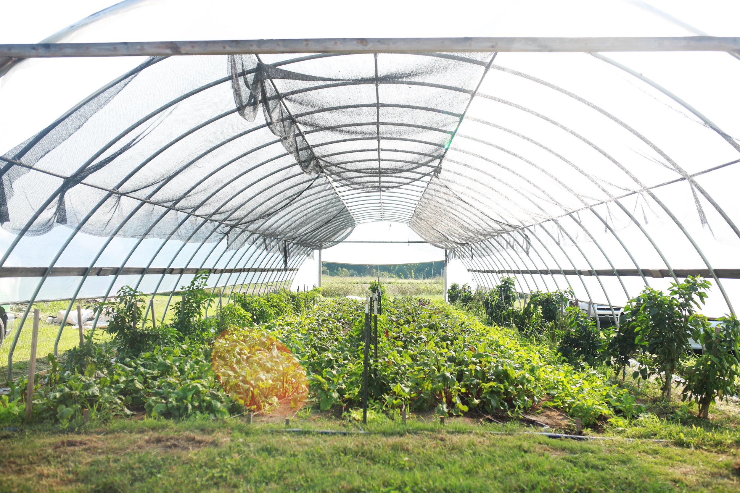 farm39.jpg