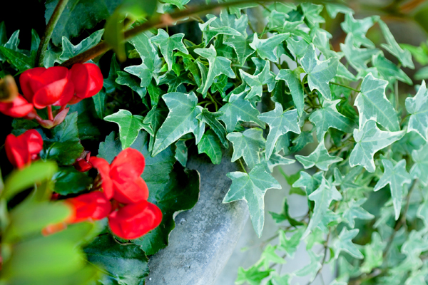 the-village-gardener-holiday-christmas-decor-indoor-outdoor-plant-rental-santa-barbara-los angeles (5).jpg