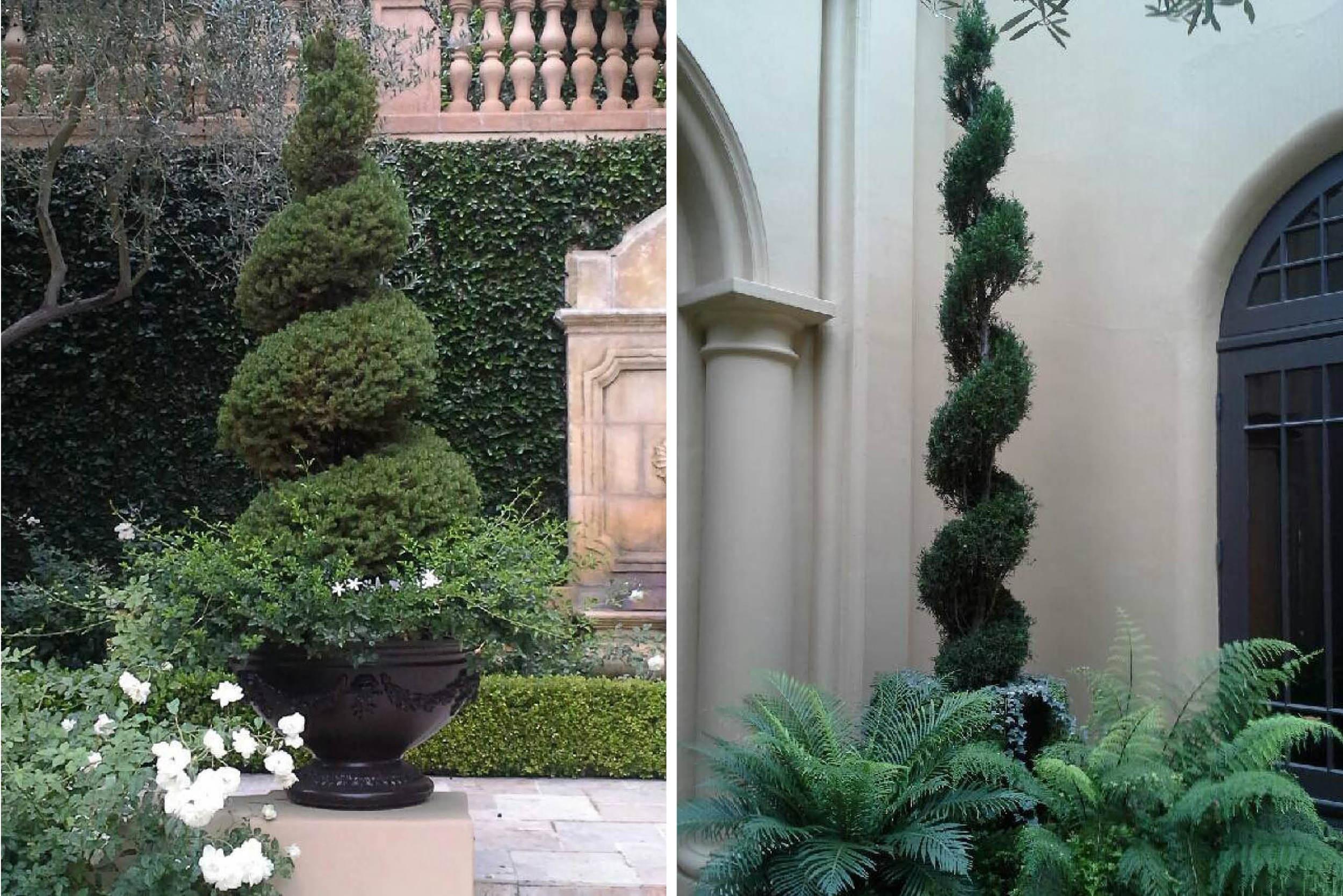 the-village-gardener-home-staging-plants-patio-decor-maintenance-interior-orchids-santa-barbara-carpinteria-losangeles-pasadena-santaynez  (2).jpg