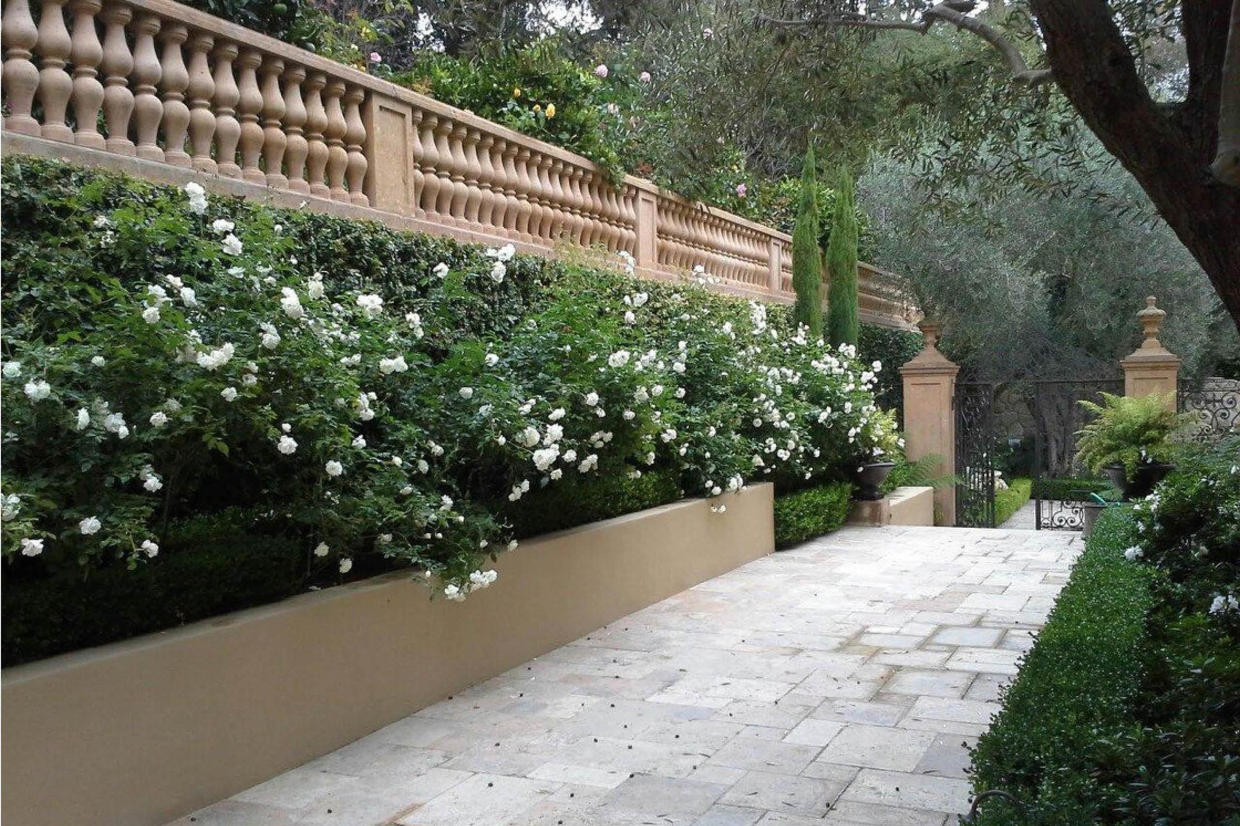 the-village-gardener-home-staging-plants-patio-decor-maintenance-interior-orchids-santa-barbara-carpinteria-losangeles-pasadena-santaynez  (3).jpg