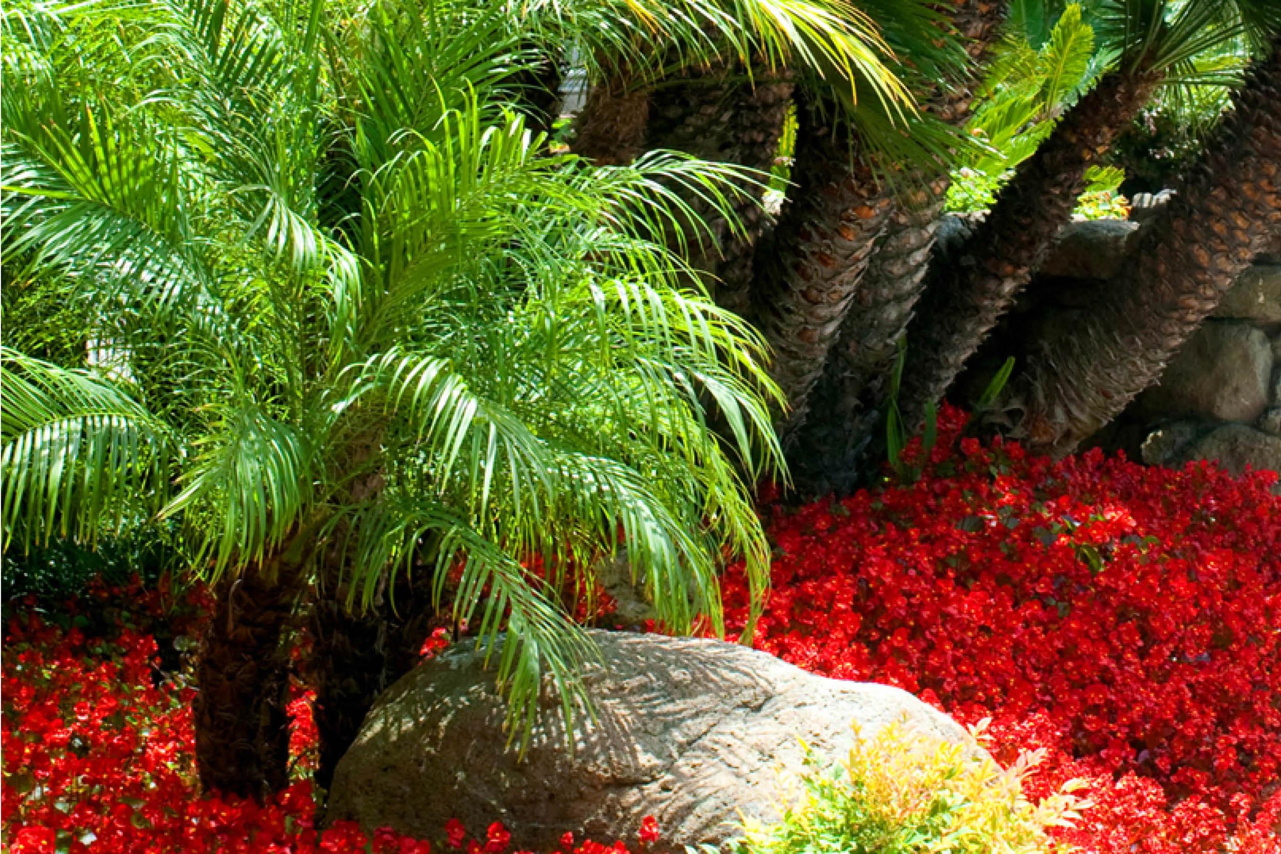 the-village-gardener-home-staging-plants-patio-decor-maintenance-interior-orchids-santa-barbara-carpinteria-losangeles-pasadena-santaynez  (5).jpg