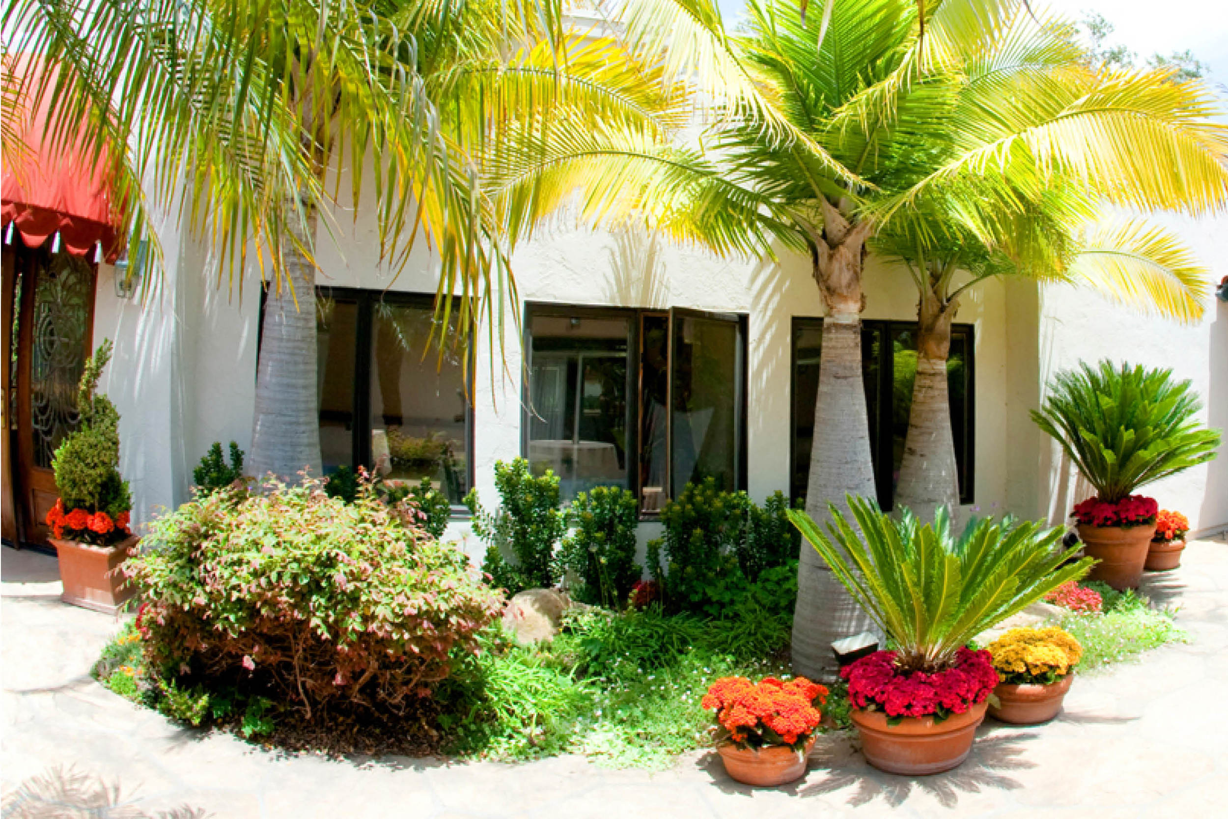 the-village-gardener-home-staging-plants-patio-decor-maintenance-interior-orchids-santa-barbara-carpinteria-losangeles-pasadena-santaynez  (6).jpg