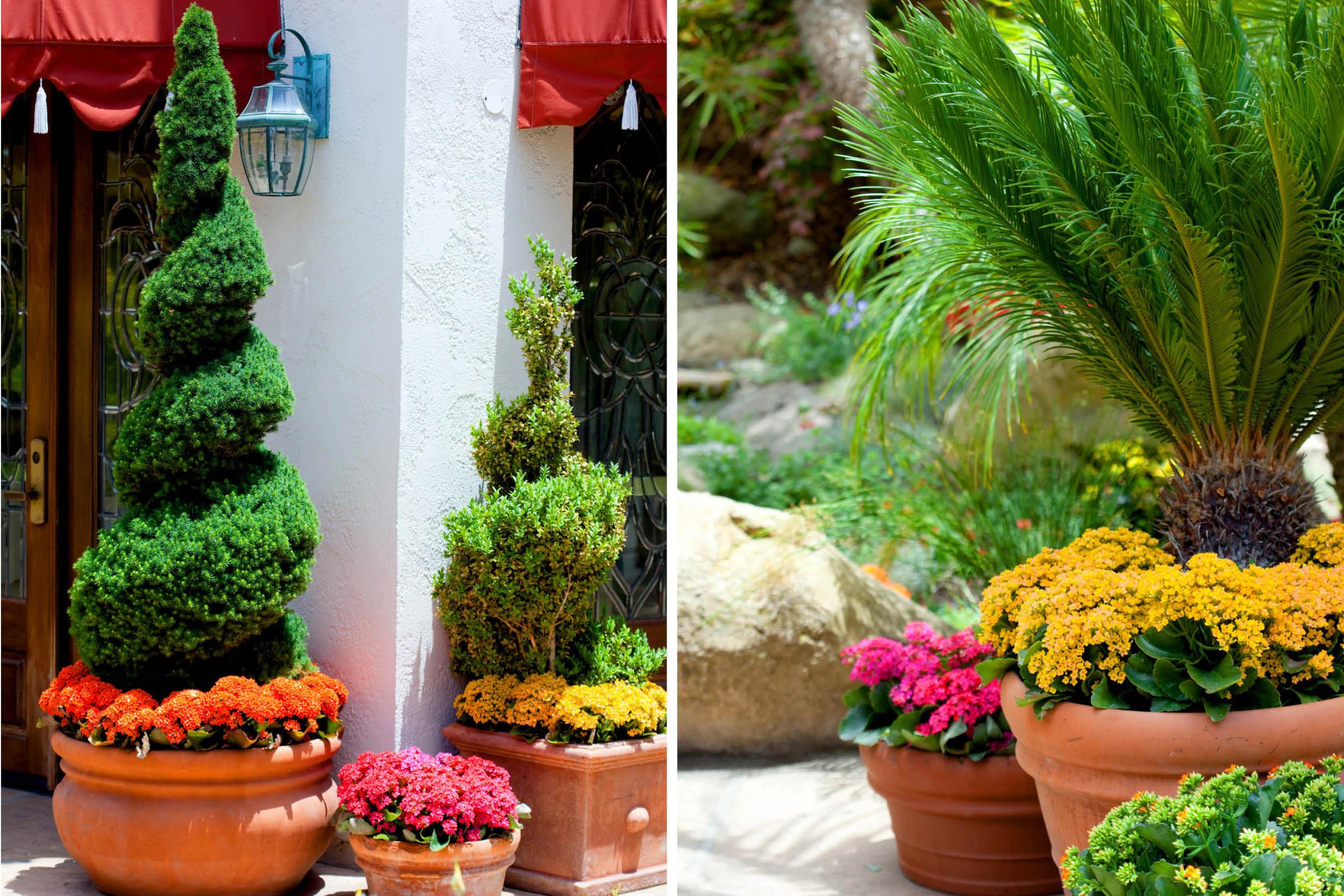 the-village-gardener-home-staging-plants-patio-decor-maintenance-interior-orchids-santa-barbara-carpinteria-losangeles-pasadena-santaynez (1).jpg