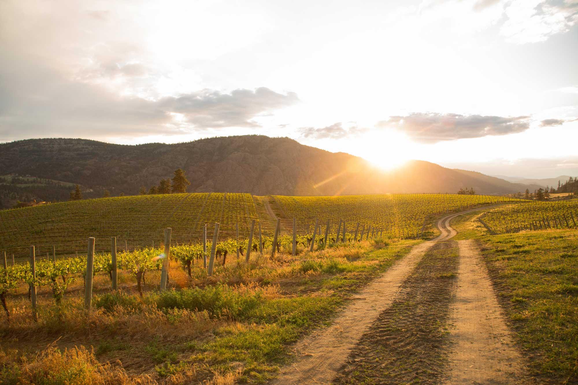 wine-photographer-chris-stenberg-7341.jpg