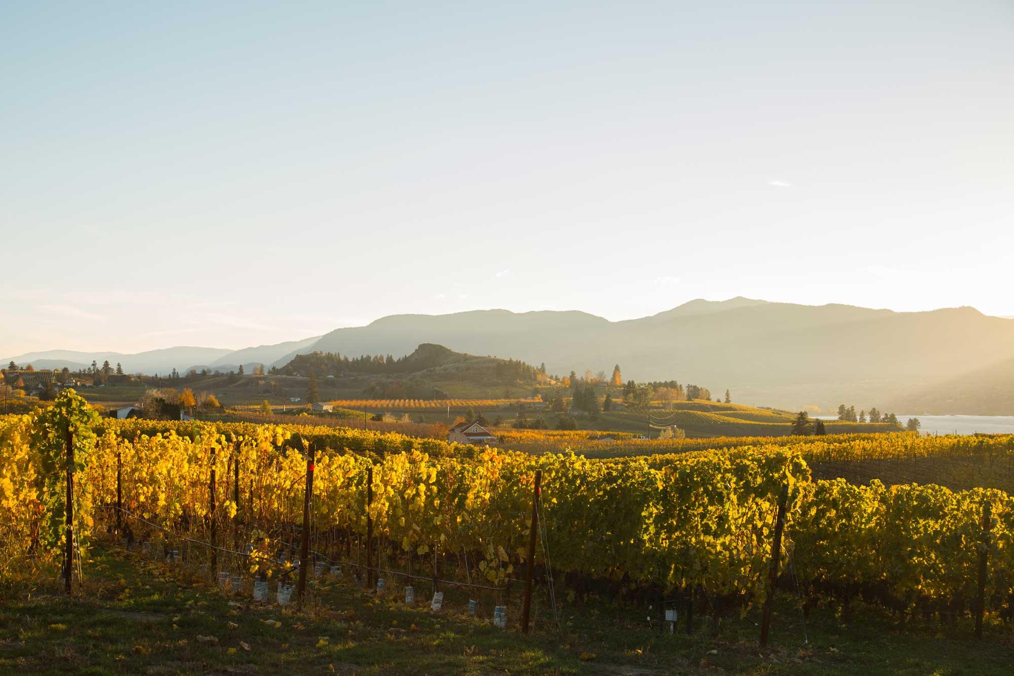 wine-photographer-chris-stenberg-0472.jpg