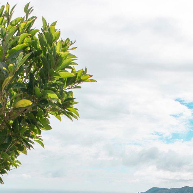 Piha (5/6) . . . . . . . . #newzealand#travel#adventure#karekare#piha#auckland#purenz#nz#beautiful#newzealandtrip#thisisnz#dji#mavic2pro#green#lush#fields#hills#goldenhour#visitnz#canon#5ds#beach#blacksandbeach#maori#statue