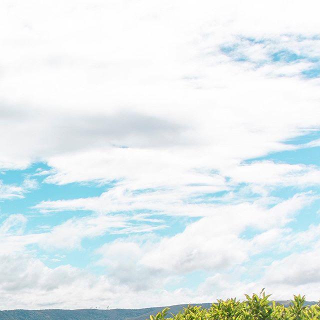 Piha (4/6) . . . . . . . . #newzealand#travel#adventure#karekare#piha#auckland#purenz#nz#beautiful#newzealandtrip#thisisnz#dji#mavic2pro#green#lush#fields#hills#goldenhour#visitnz#canon#5ds#beach#blacksandbeach#maori#statue