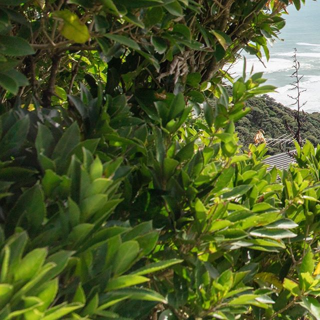 Piha (3/6) . . . . . . . . #newzealand#travel#adventure#karekare#piha#auckland#purenz#nz#beautiful#newzealandtrip#thisisnz#dji#mavic2pro#green#lush#fields#hills#goldenhour#visitnz#canon#5ds#beach#blacksandbeach#maori#statue