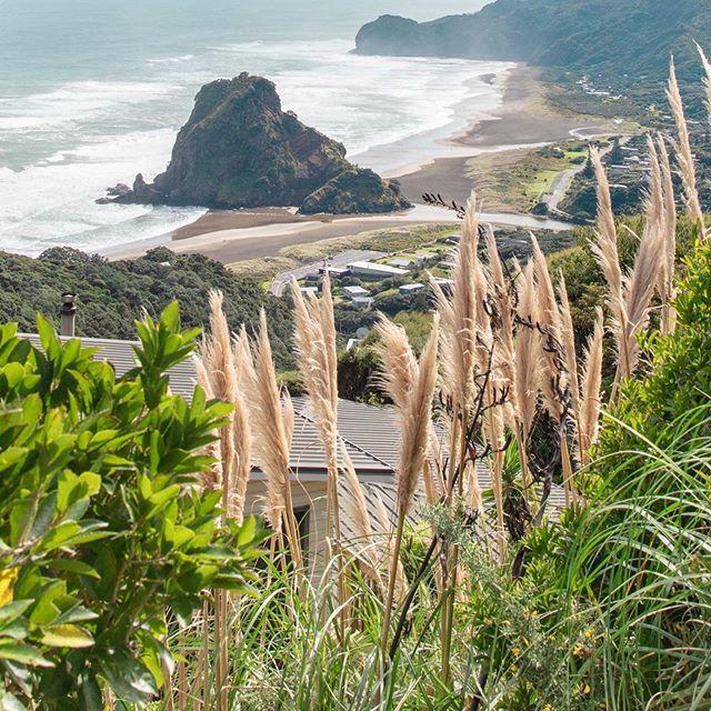 Piha (2/6) . . . . . . . . #newzealand#travel#adventure#karekare#piha#auckland#purenz#nz#beautiful#newzealandtrip#thisisnz#dji#mavic2pro#green#lush#fields#hills#goldenhour#visitnz#canon#5ds#beach#blacksandbeach#maori#statue