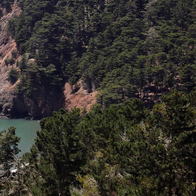 Love the nature around SF (1/6) . . . . . . #sanfrancisco #goldengatebridge #hawkhill #canon #5dmkiv #findyourpeak #nature #naturephotograpy