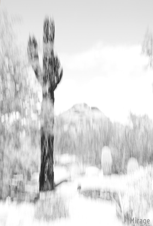 Saguaro1Lo.jpg