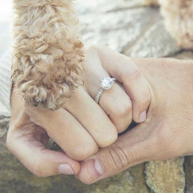 The only way to make an engagement shoot more fun is to add in a pet. #engagementphotography #downtownmckinney #mckinneyphotographer #doglove #engagementring #engagementringphotos #engagementpictureideas #proofphoto #mckinneytx #happytuesday