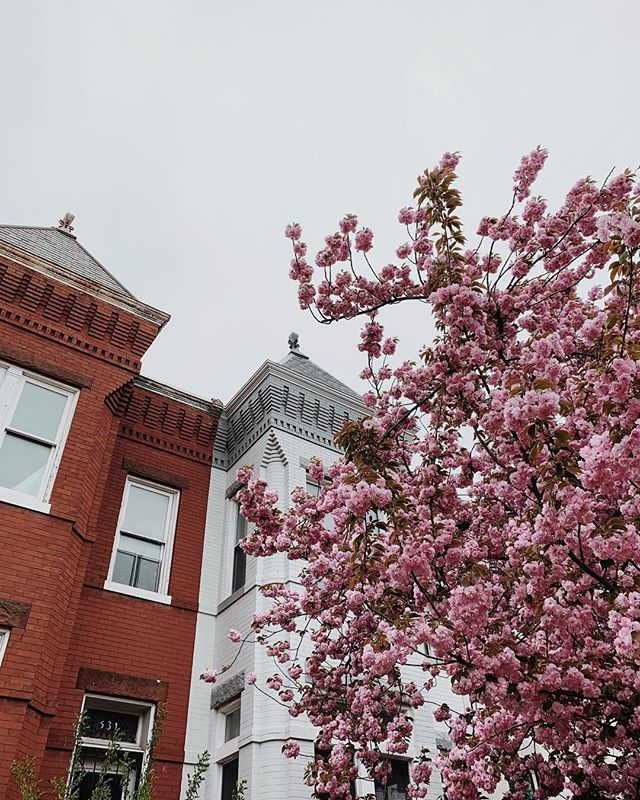 DC, you look reaaaalllll pretty in the spring time 😍 we took a quick trip to the city this weekend and spent time celebrating friends, walking a lot, and drinking coffee of course! We always love being in the same city and we especially love it when that city is DC!