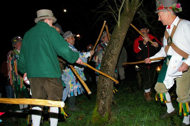 The first element of a wassail is to beat the selected apple tree with sticks to drive out evil spirits that may spoil the crop. Here the Broadwood Morris Men are doing their dutyPhoto by   Glyn Baker