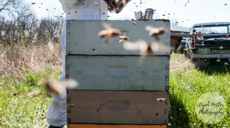 TwoHoneyBees-Blog-04.jpg