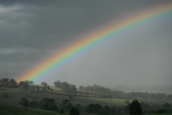 Rainbow over the hills - Dorrigo