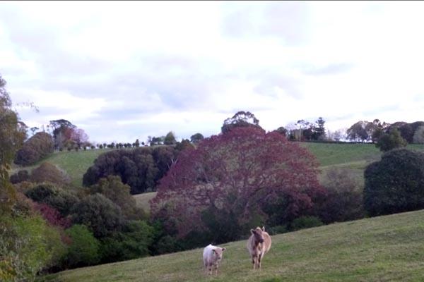 farm view Dorrigo