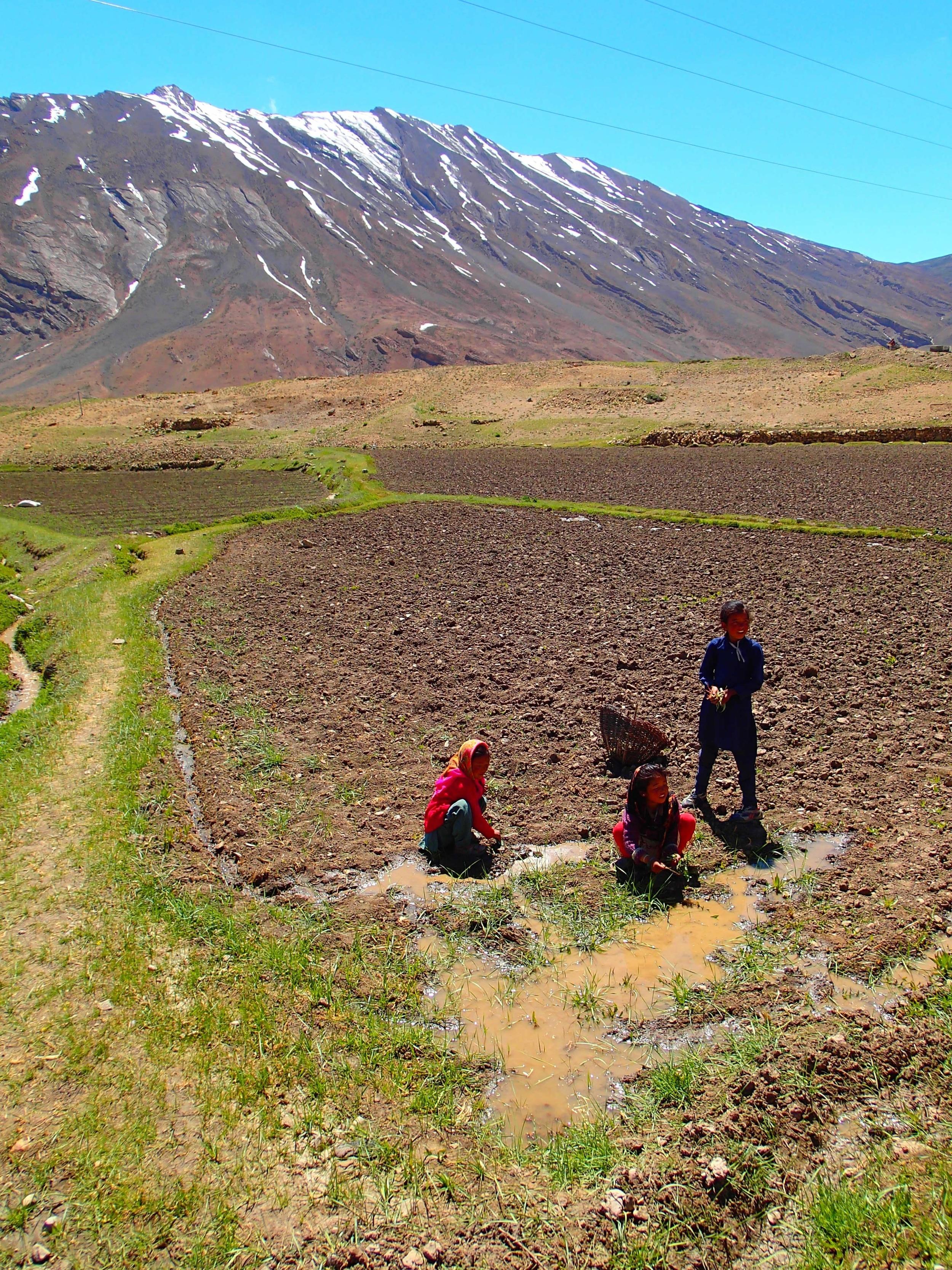 Women at work, outside of Kibber