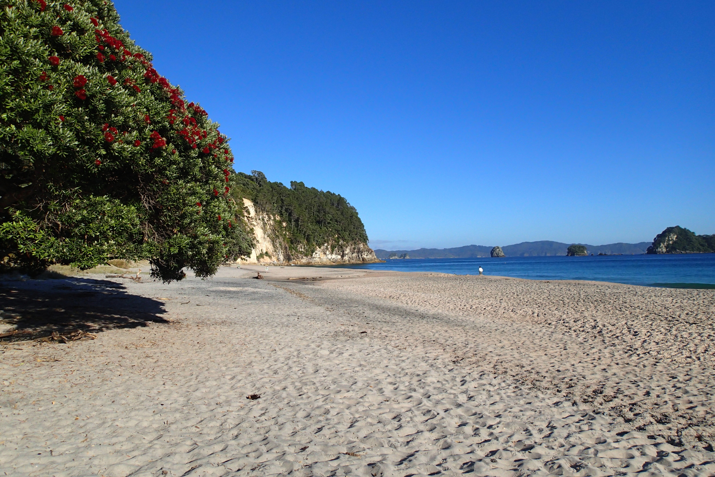 Beautiful beaches galore: in New Zealand,the coast is never far