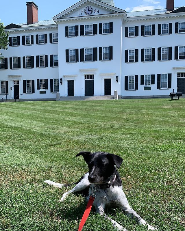 Dog days at Dartmouth. Alux likes his classes fine. Wishes he was getting more treats for being a good boy.