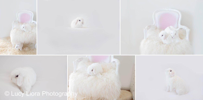 san-gabriel-valley-pet-photographer-bunny-1