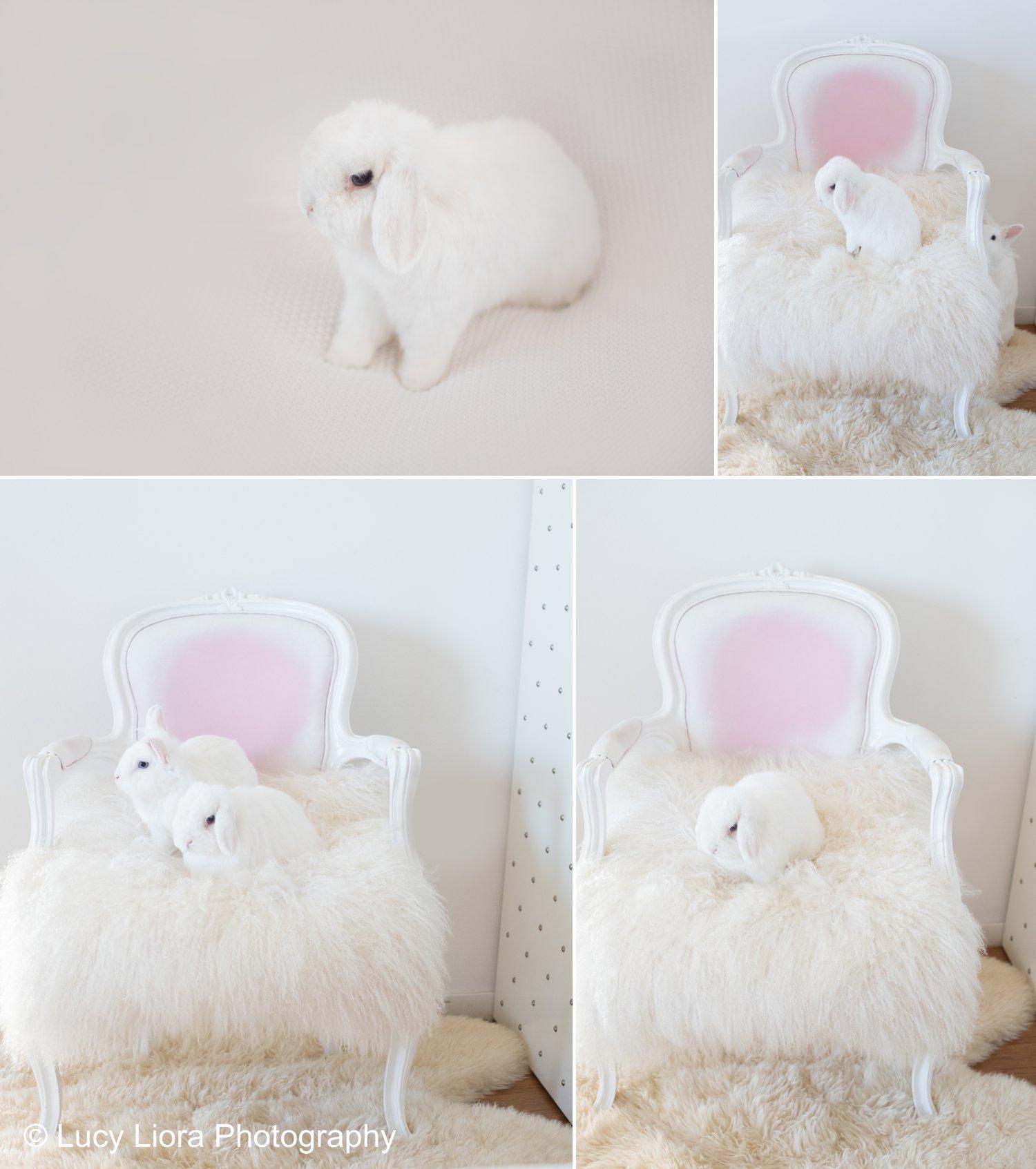 san-gabriel-valley-pet-photographer-bunny-2