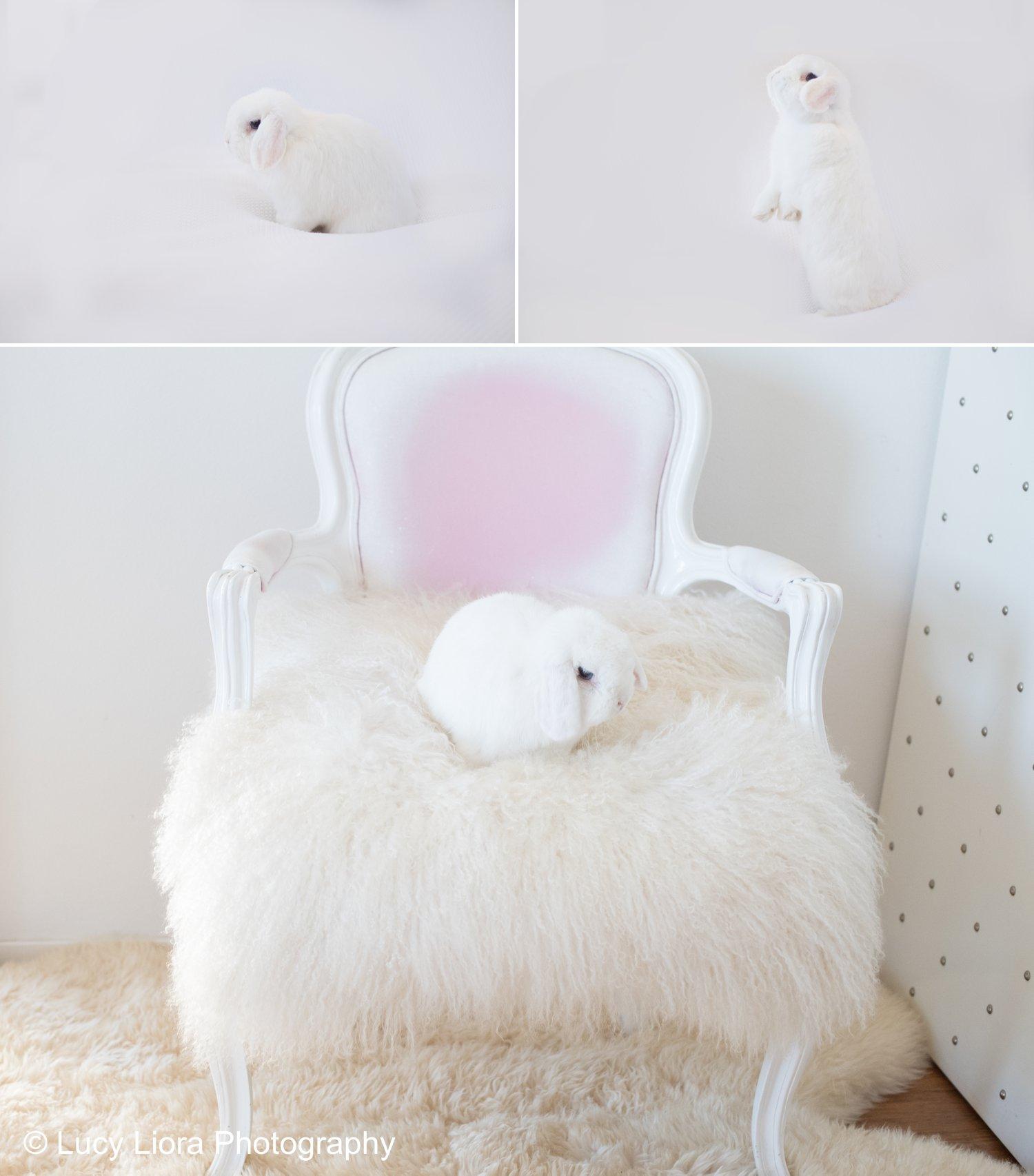 san-gabriel-valley-pet-photographer-bunny-3