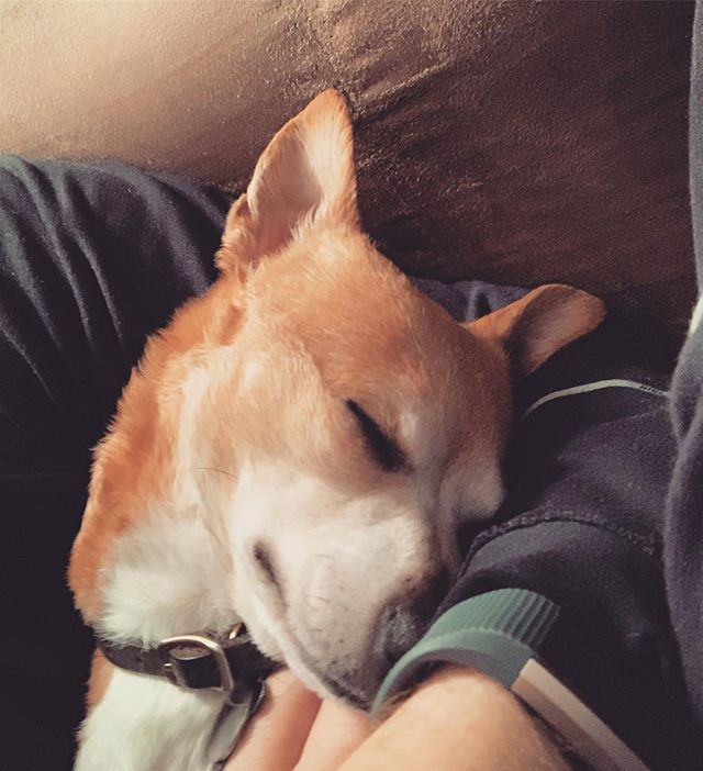 Dogs truly are the best ♥️🔥#doggie #zzz