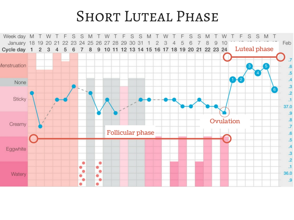 Short luteal phase - The Preggers Kitchen luteal phase defect
