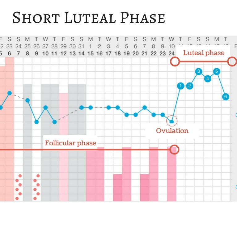 Short+luteal+phase