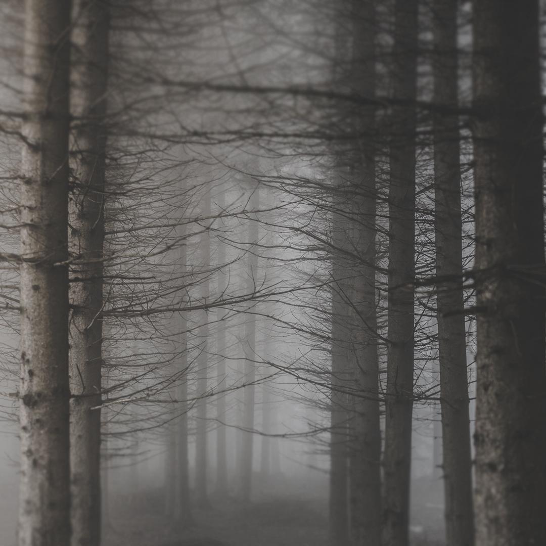 GaliciaForest2.jpg