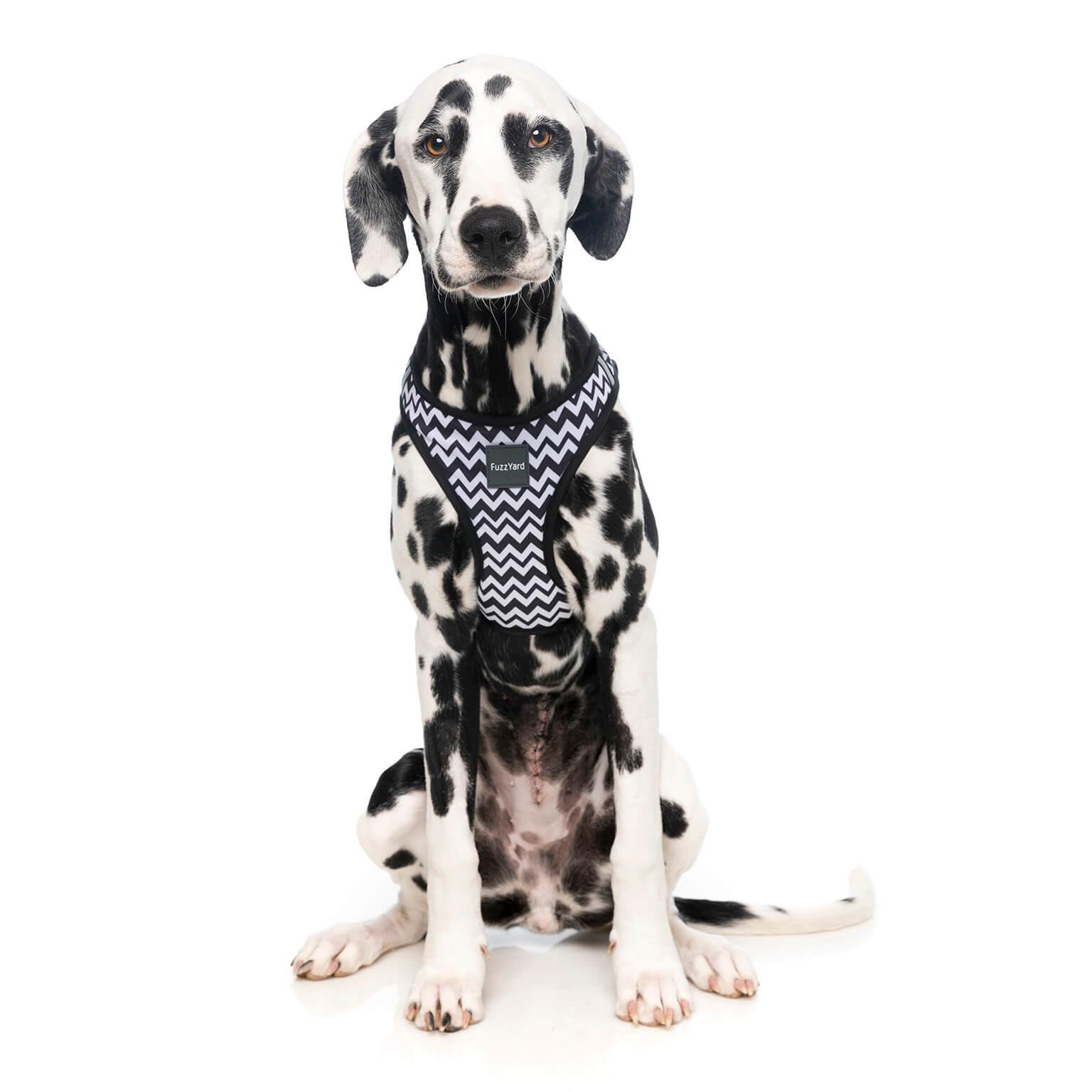 fuzzyard-stepinharness-okok-dog-1.jpg