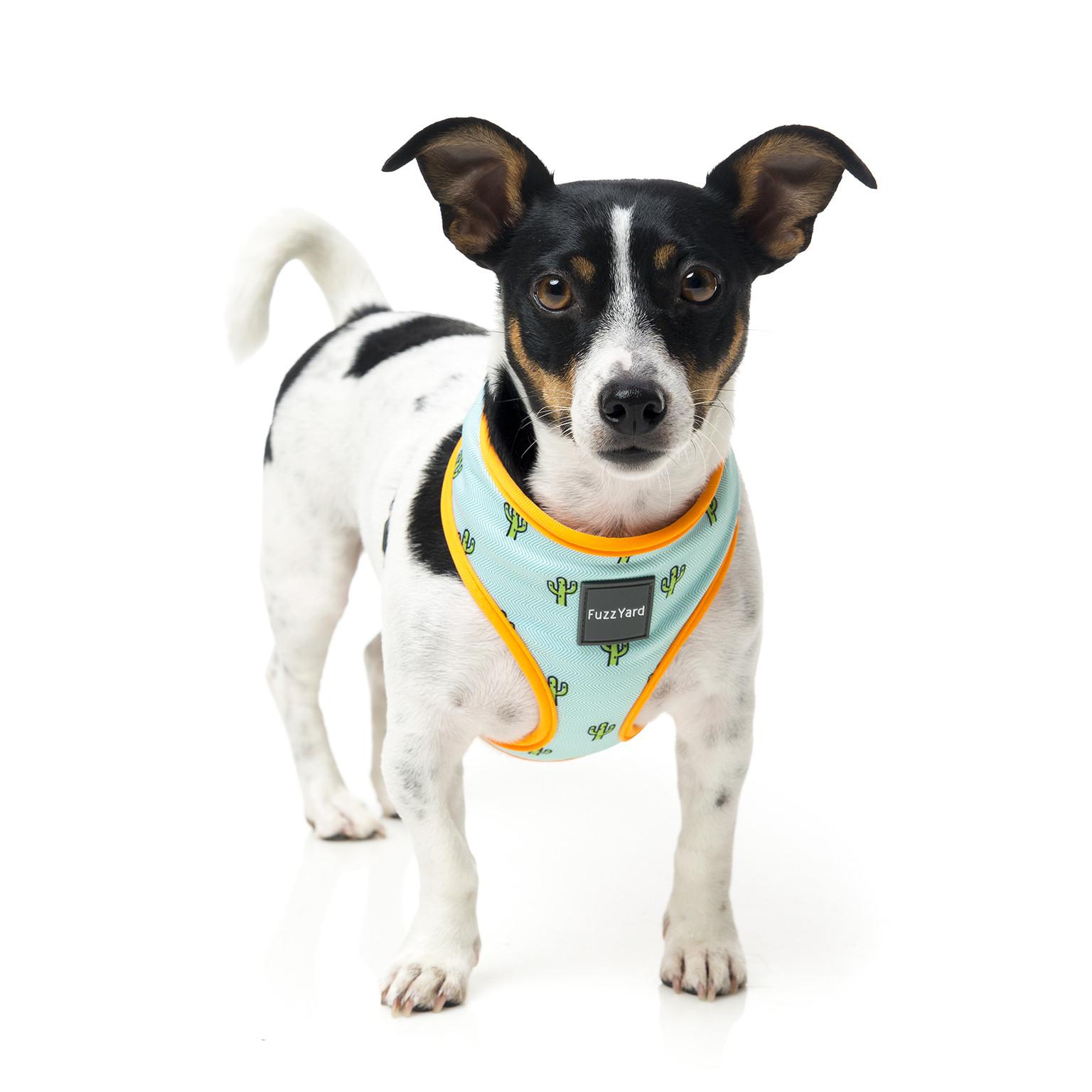 fuzzyard-harness-tucson-dog-1.jpg
