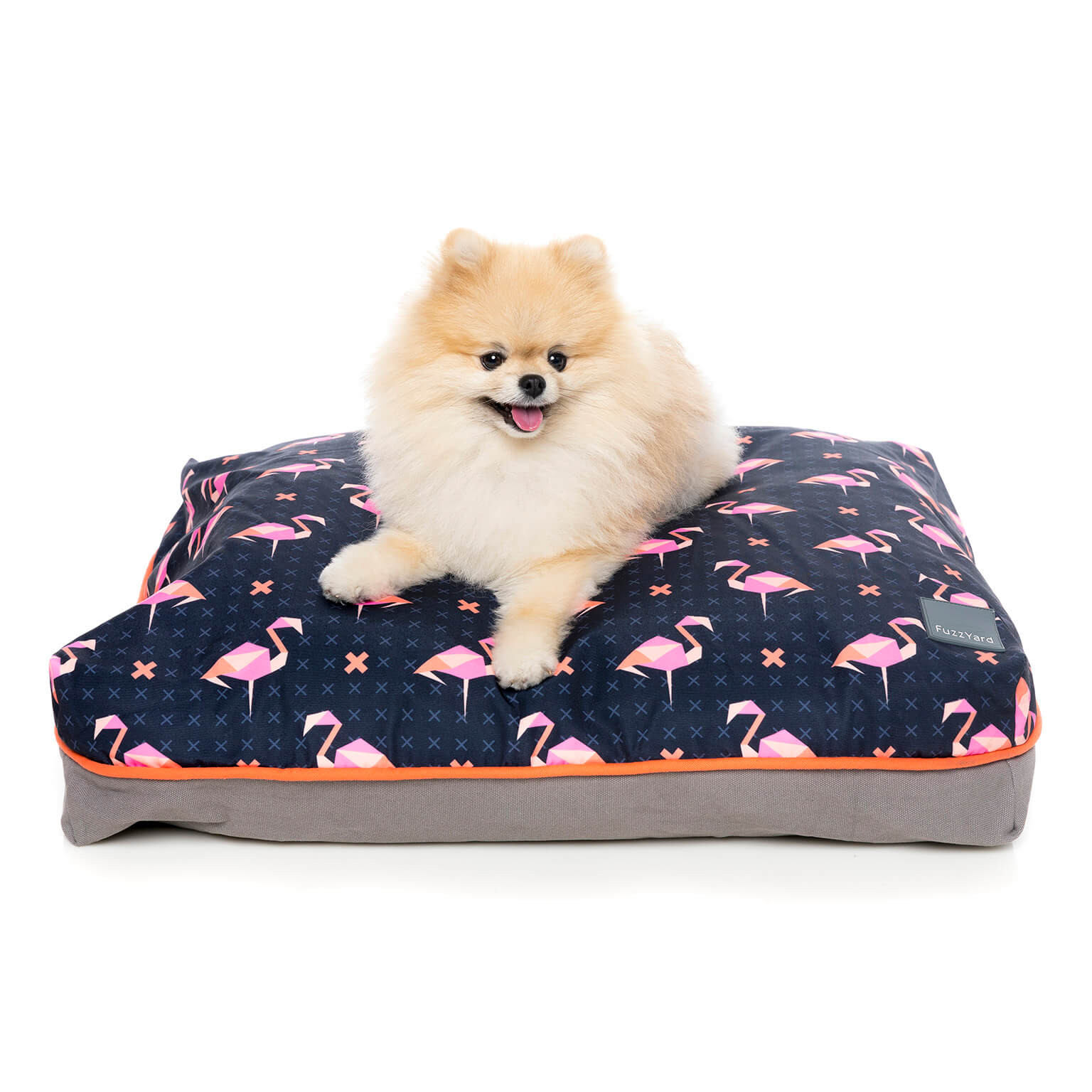 fuzzyard-bigdreamerpillow-fabmingo-dog-1.jpg