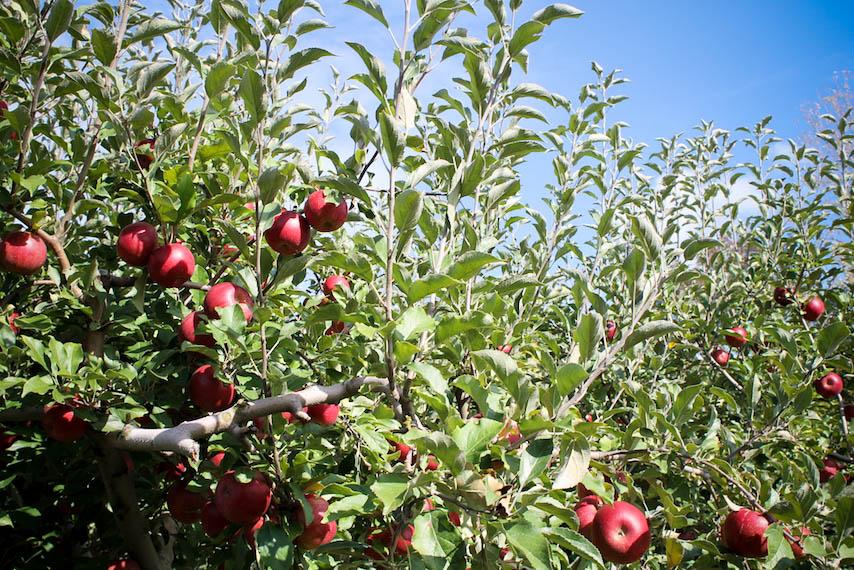 Orchard-12.jpg