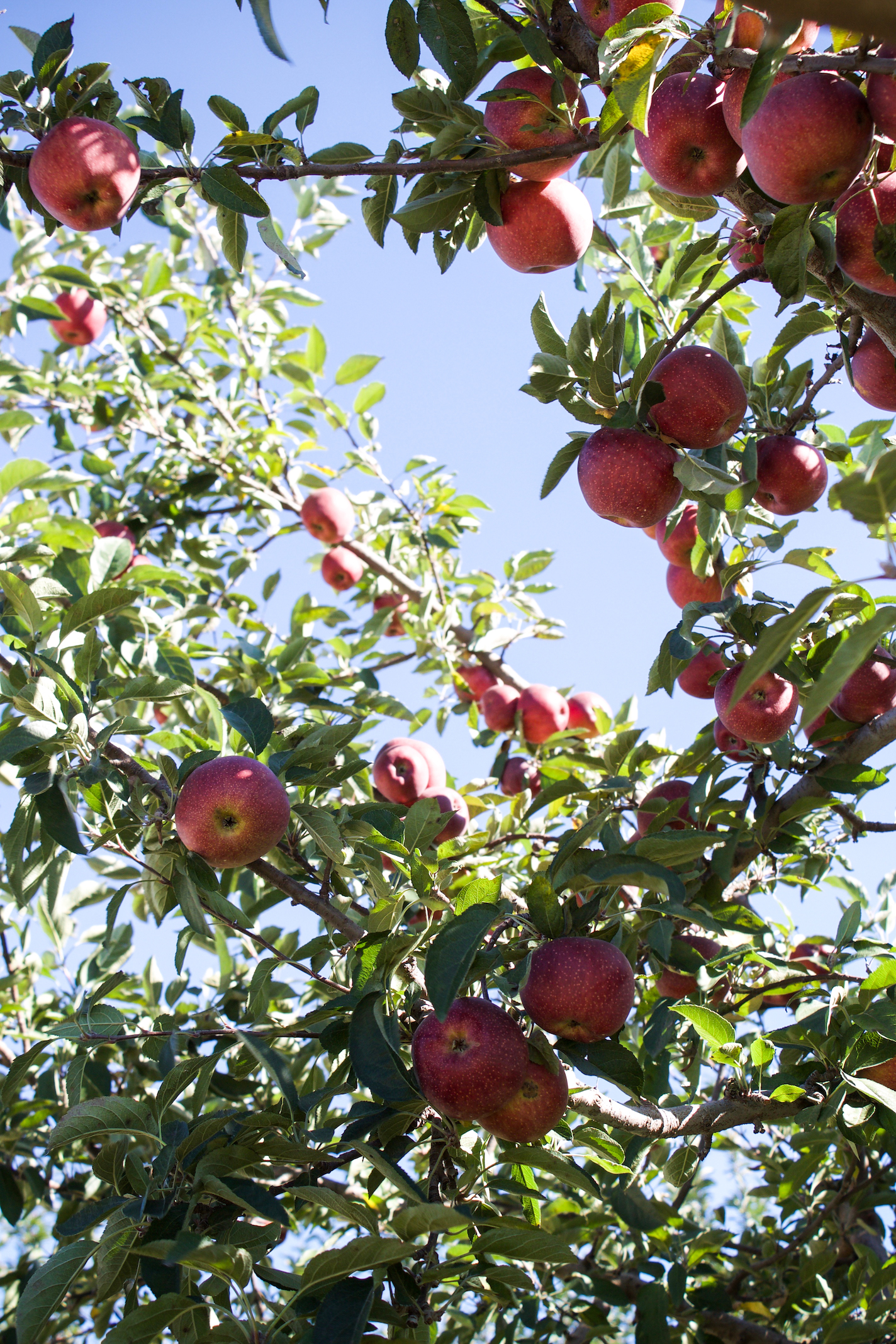Anderson orchard 5.jpg