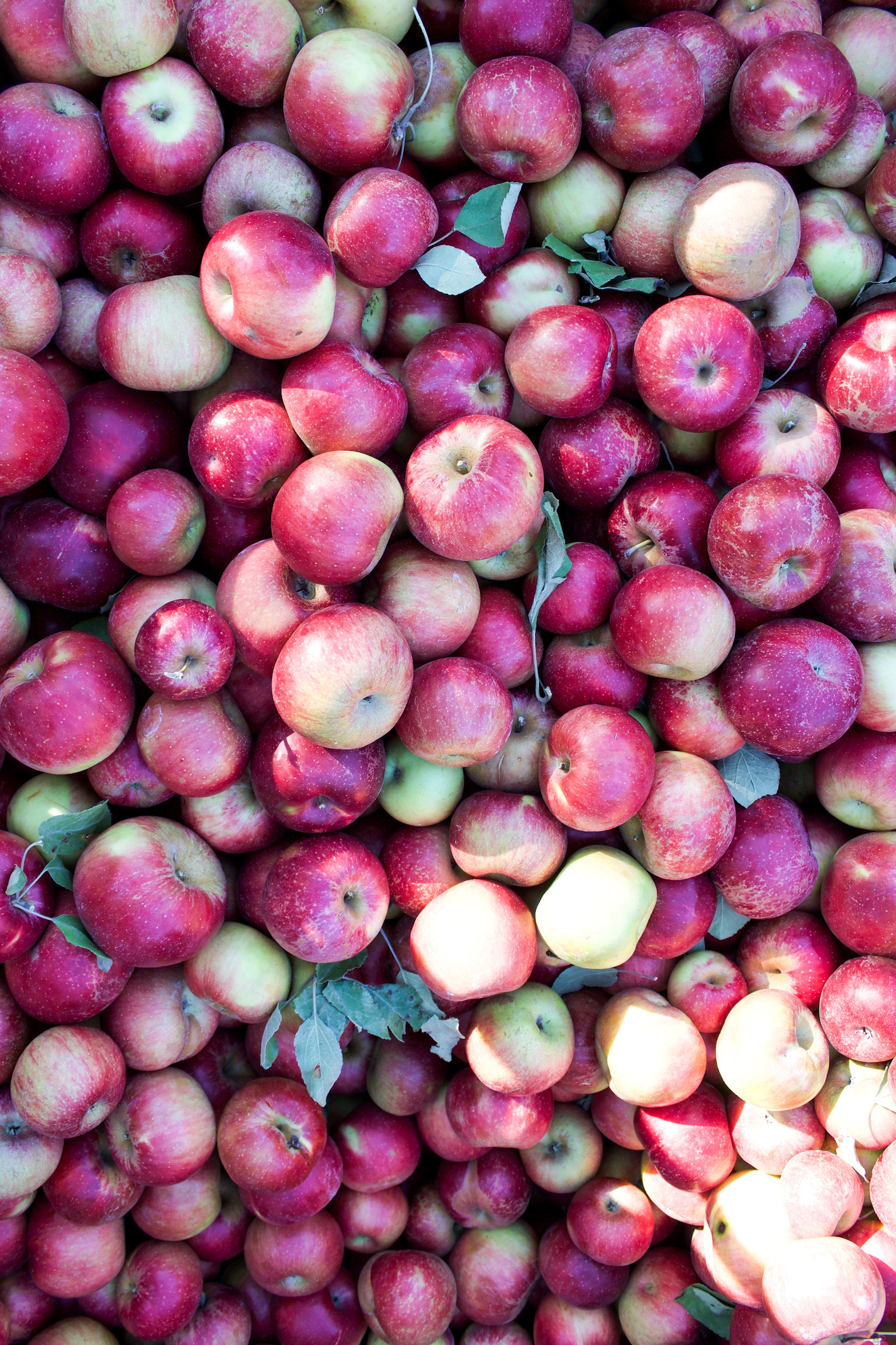 Anderson orchard 6.jpg