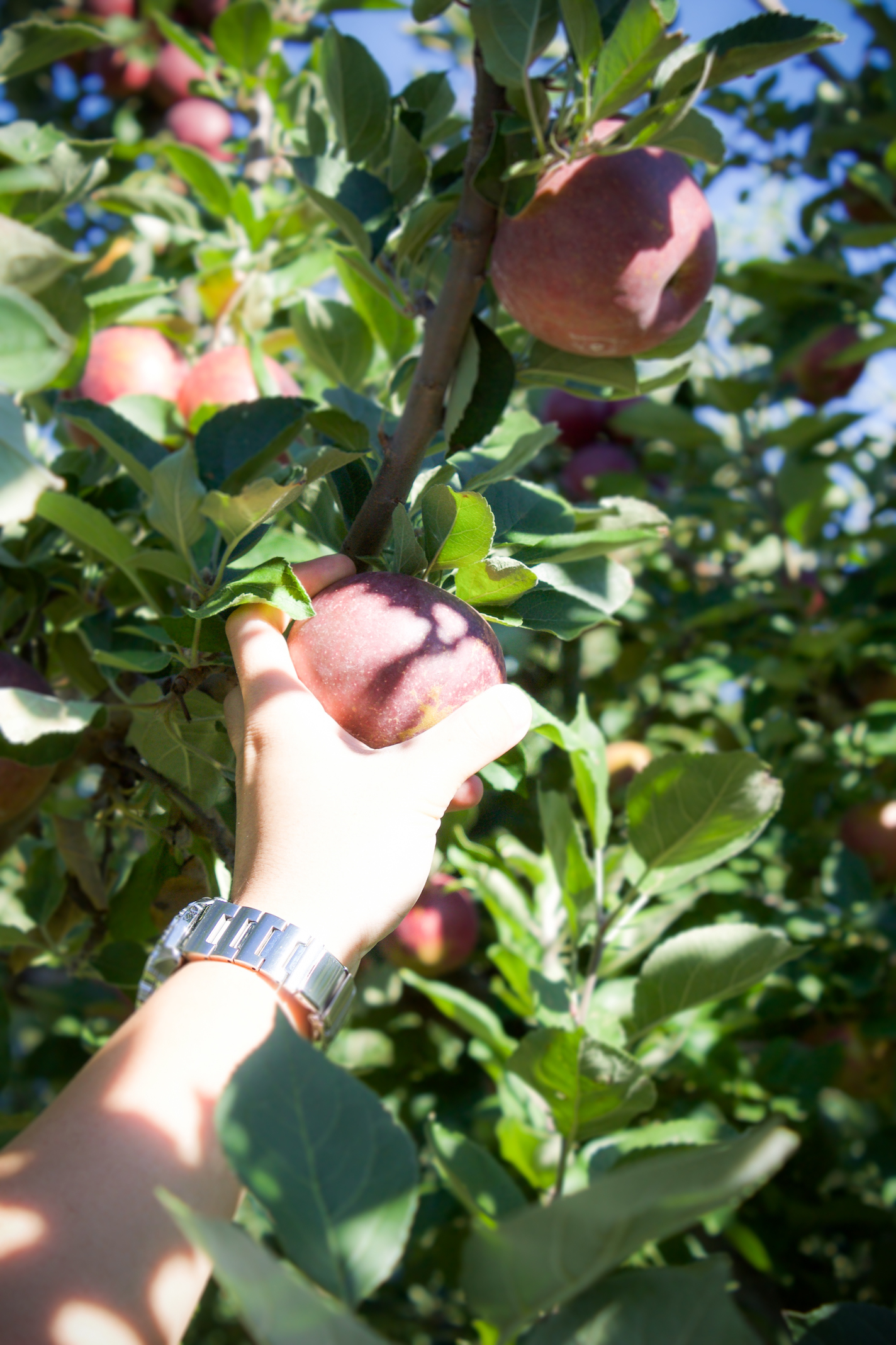 Anderson orchard 13.jpg
