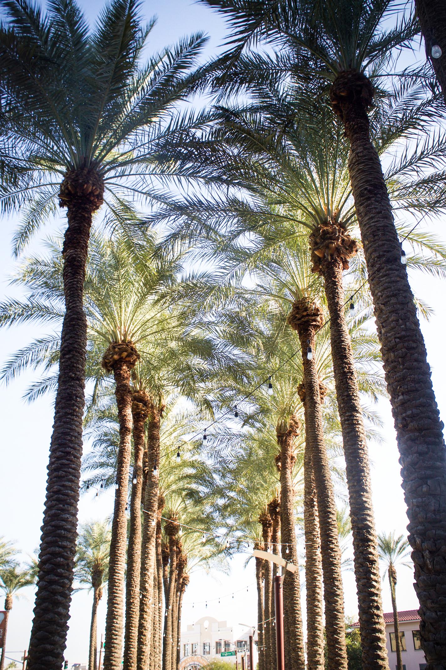Phoenix 2.jpg