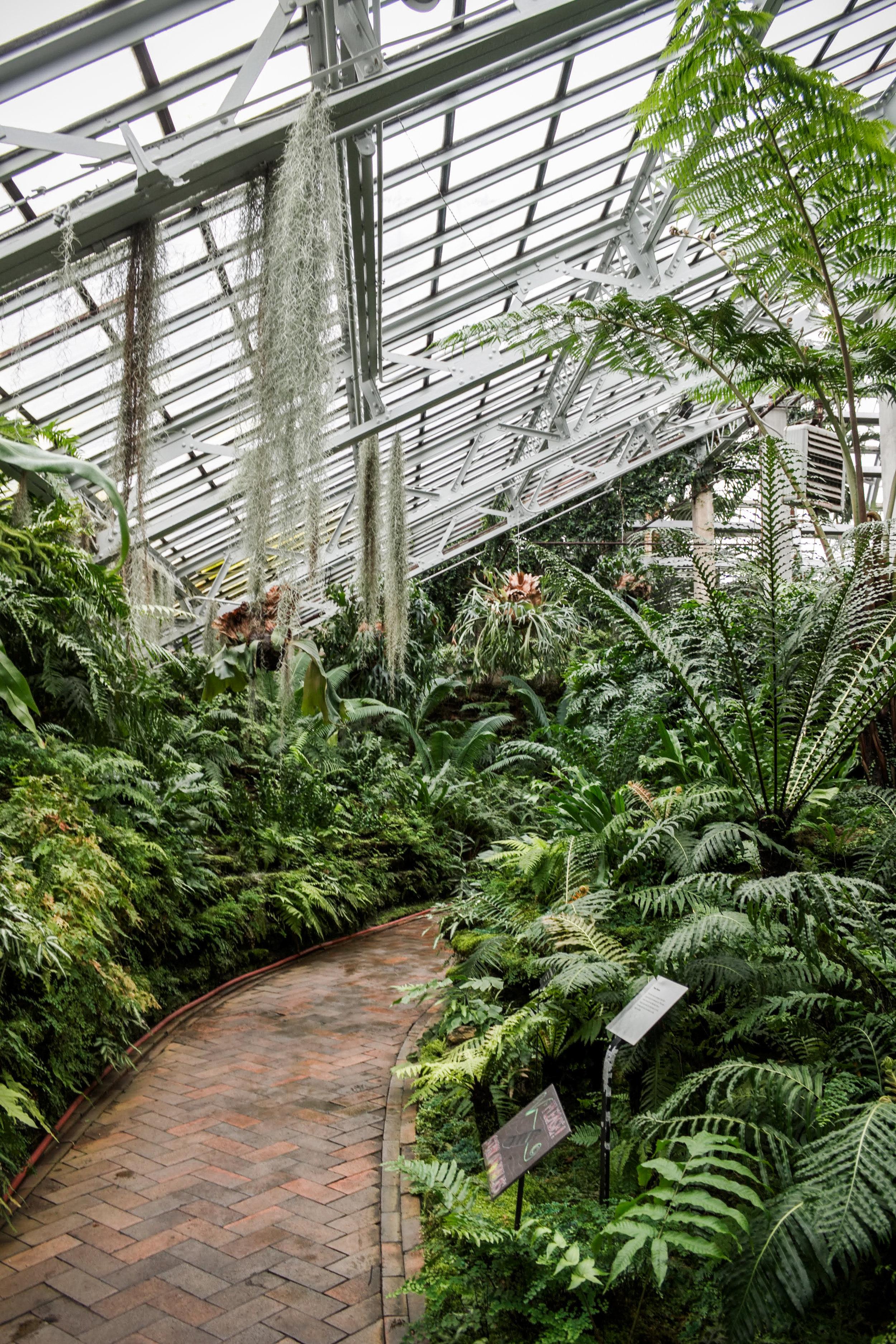 Garfield Park Conservatory 8.jpg