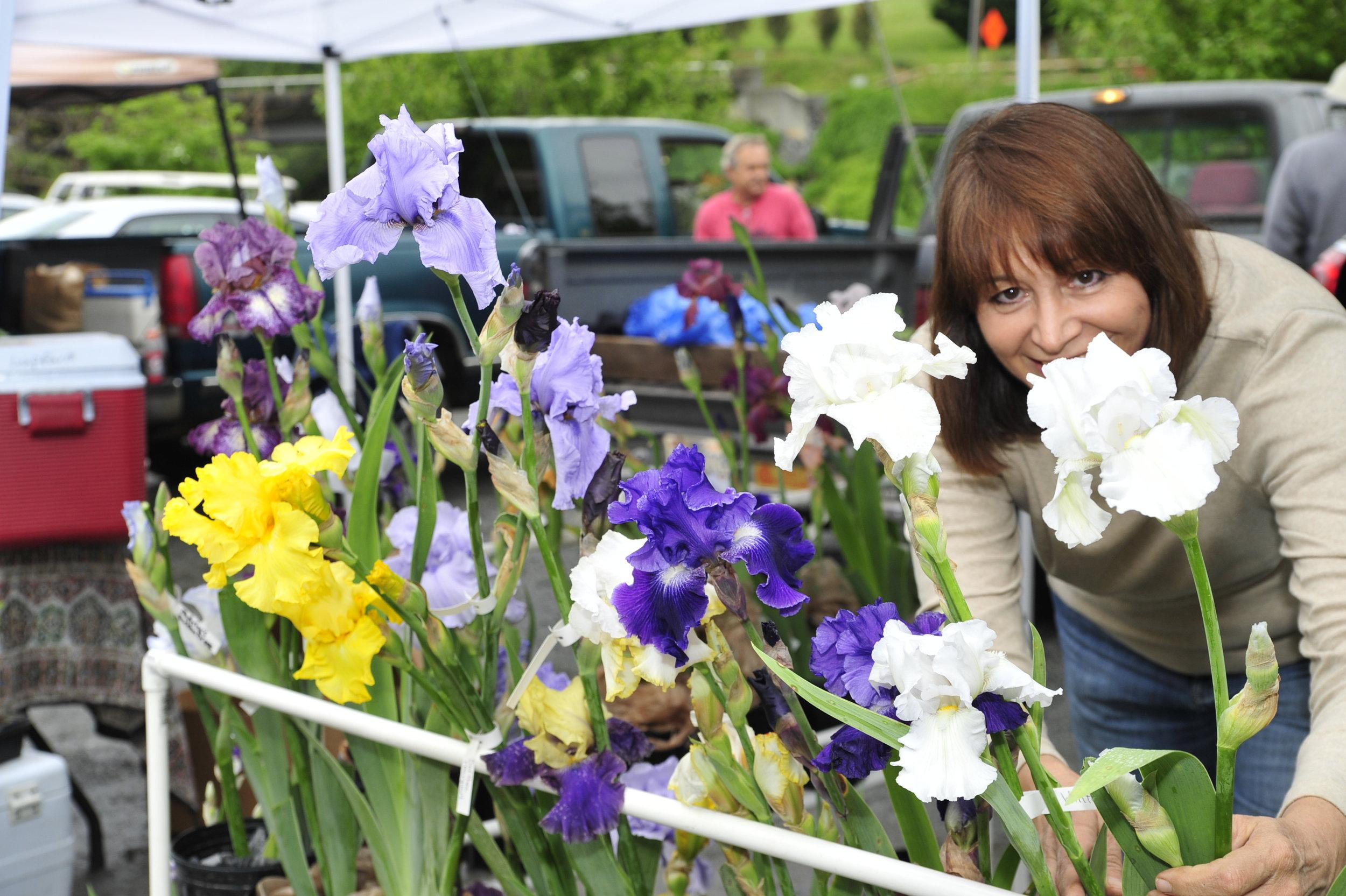 Irises.jpg