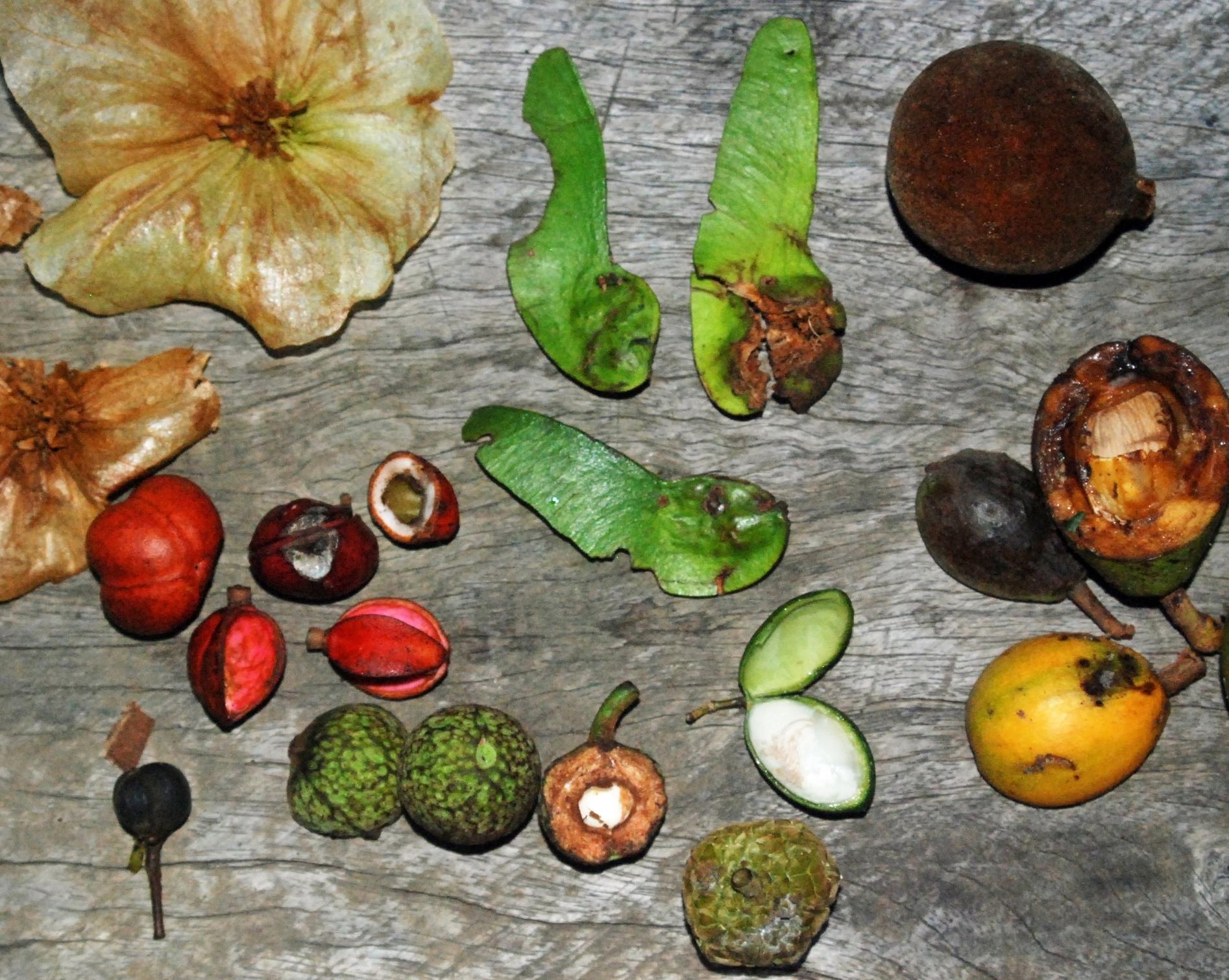 Misc Fruits.jpg