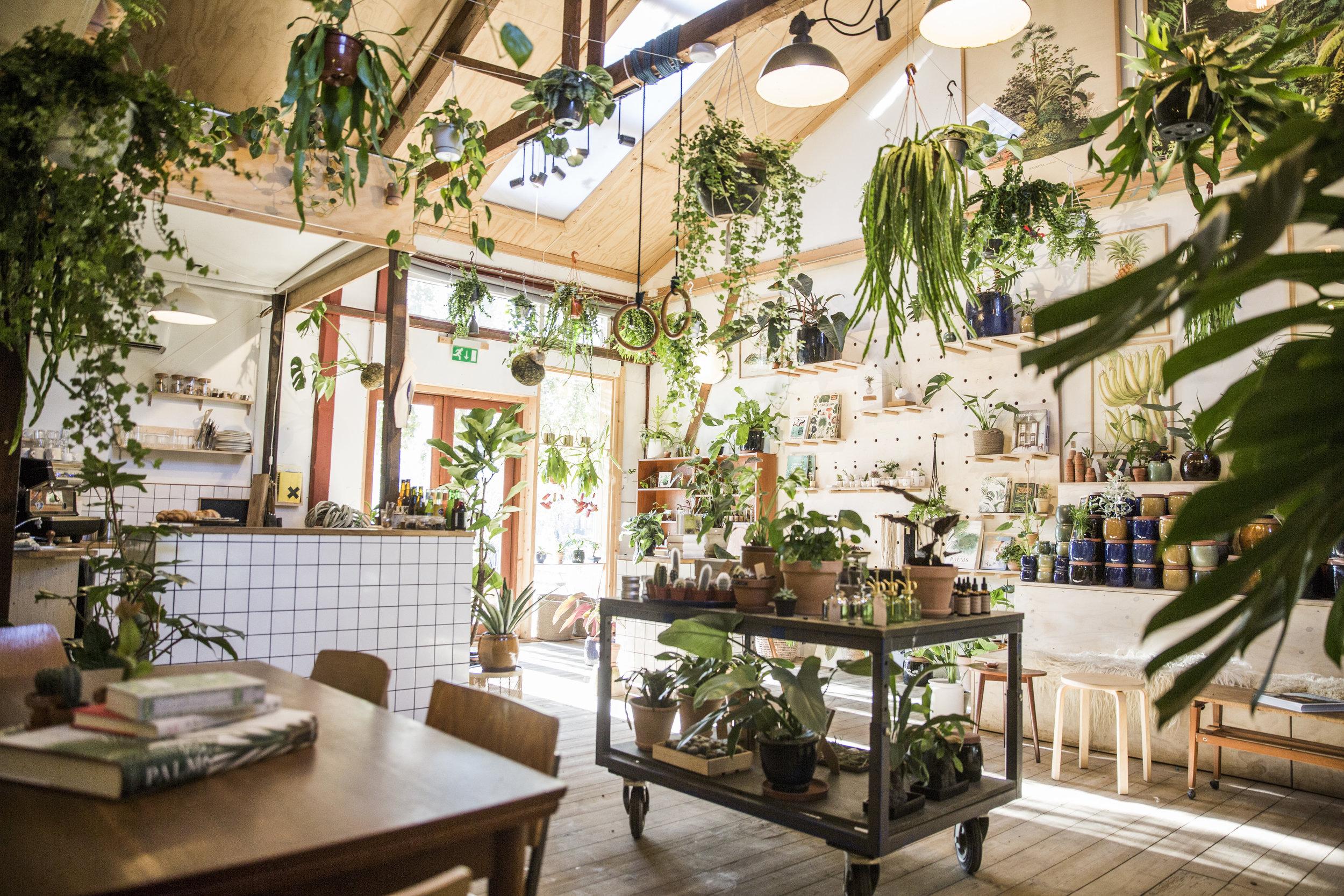 plantecaféen - Plantecaféen er vores butik, showroom og café.Indsæt beskrivende tekst.Learn more ➝