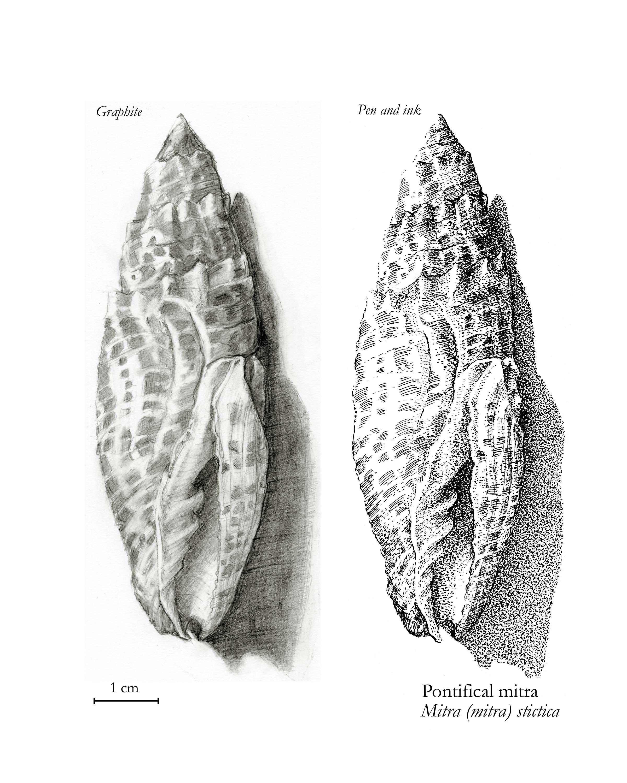 Mitra shell