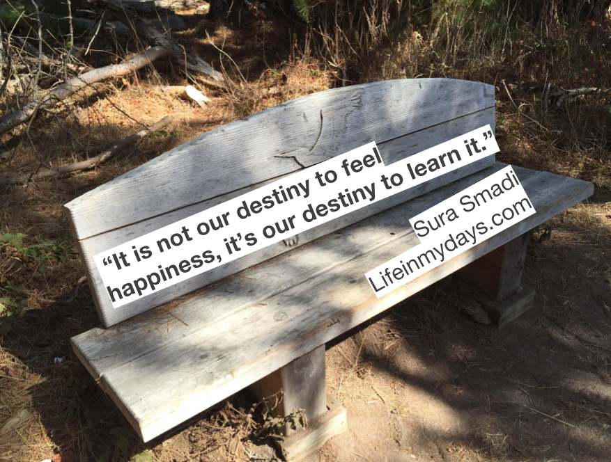 "A park bench in Carmelle California, basked by trees and roots, with a quote by Sura Smadi ""It is not our destiny to feel happiness, it is our destiny to learn it."""